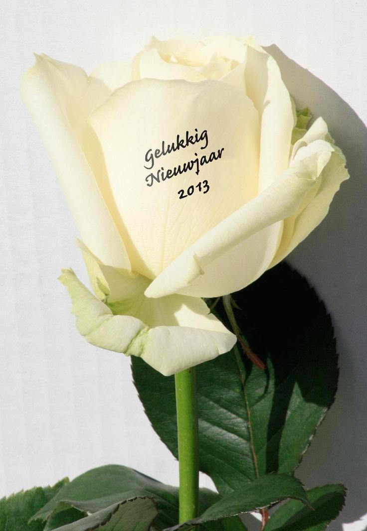 Zeg het met een roos! Gelukkig Nieuwjaar!