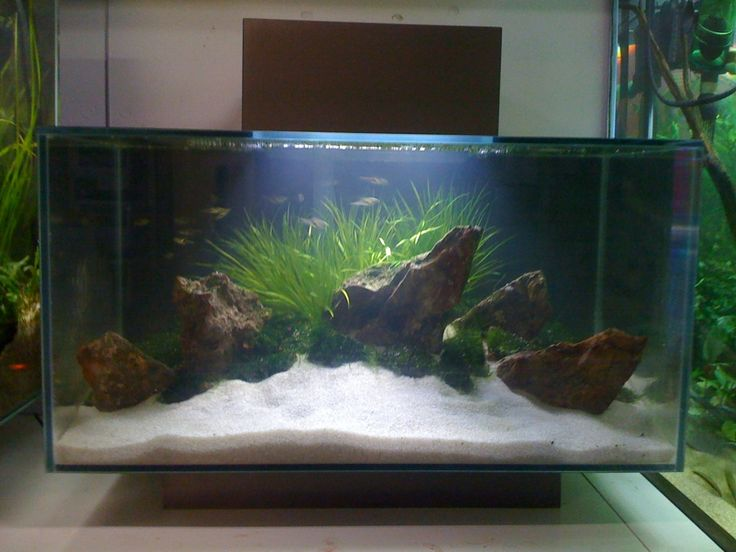 46 best images about aquascape fluval edge 46 on pinterest for Fluval fish tank filter