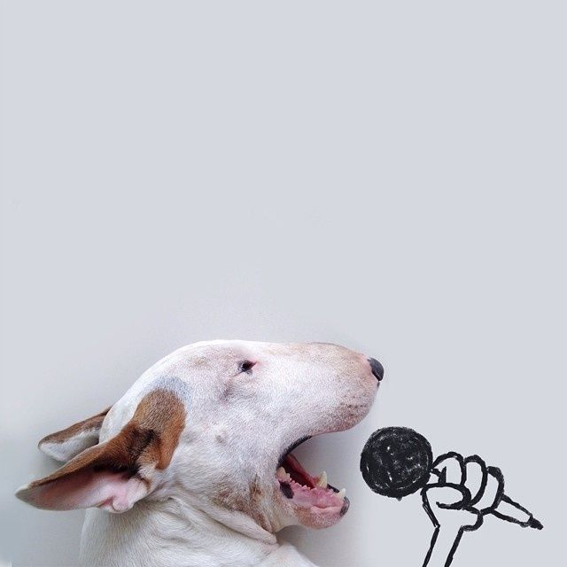 Rafael Mantesso - Bull Terrier Illustrations