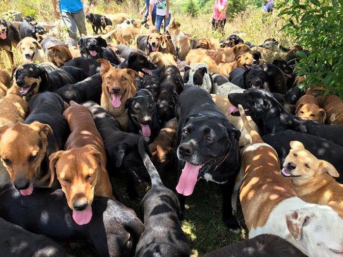これぞ犬の楽園!コスタリカにある捨て犬たちの保護シェルターが素敵すぎると話題に! - Spotlight (スポットライト)
