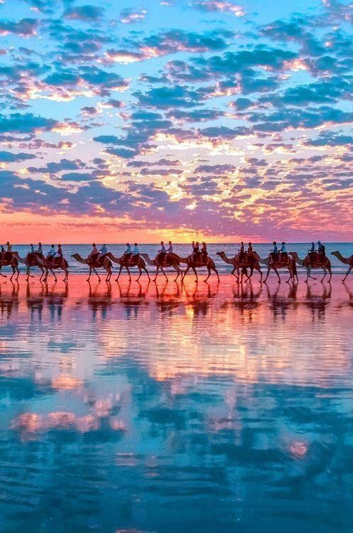 Sunset Camels on Cable Beach, near Broome, Western Australia.