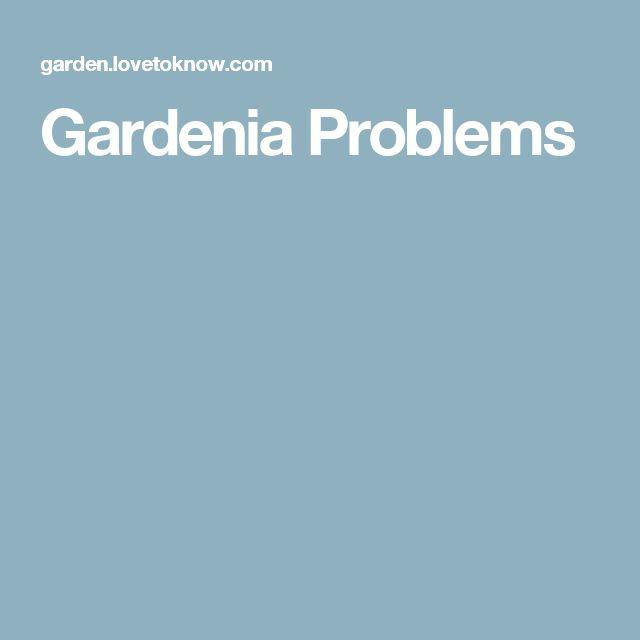 Gardenia Problems