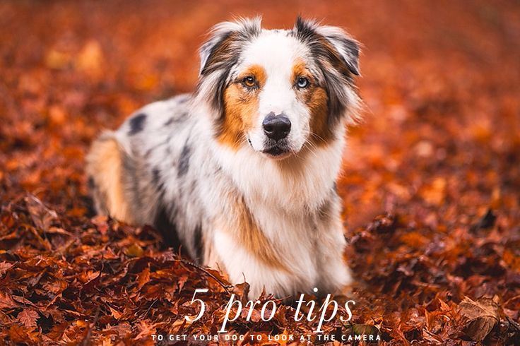5 Professional Photographer Tips To Get Better Pet Photos | Pretty Fluffy