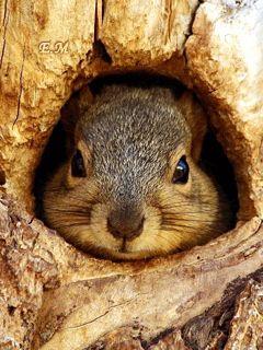 ♥.• ✿e=Esquilo ✿*´♥¨