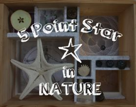 Natural Pentagram Star. Find the 5 point star in nature. http://thesmarthappyproject.com/five-pointed-star-nature/