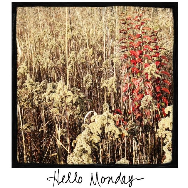 Hello Monday! Come by and visit A Warm Hello!