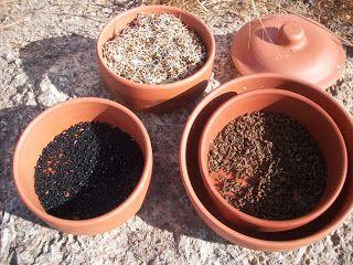 Leite da Terra: Sementes que são utilizadas para germinar brotos