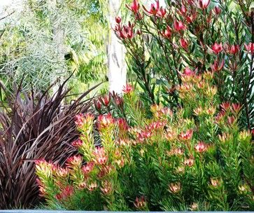 Backyard Landscaping Ideas San Diego full size of backyard15 small backyard pond ideas koi ponds 17 best images about Leucadendron And Phormium Landscape San Diego Debora Carl Landscape Design