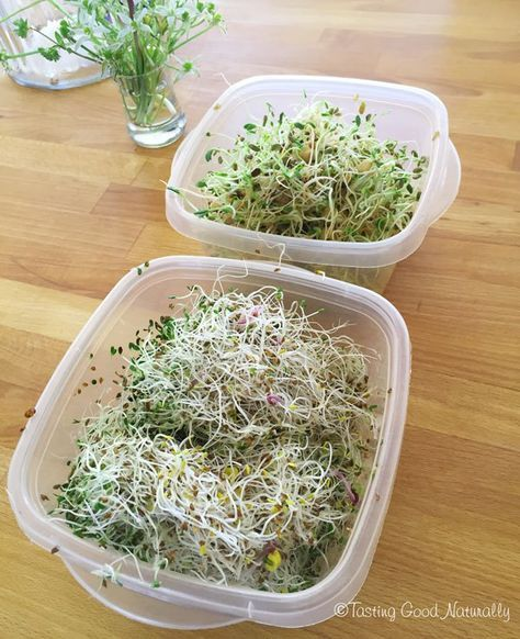 Tasting Good Naturally : Comment utiliser les graines germées ?