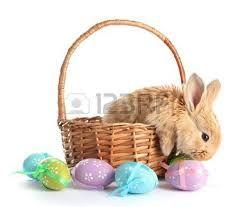 Resultado de imagen de imagenes de conejos tiernos
