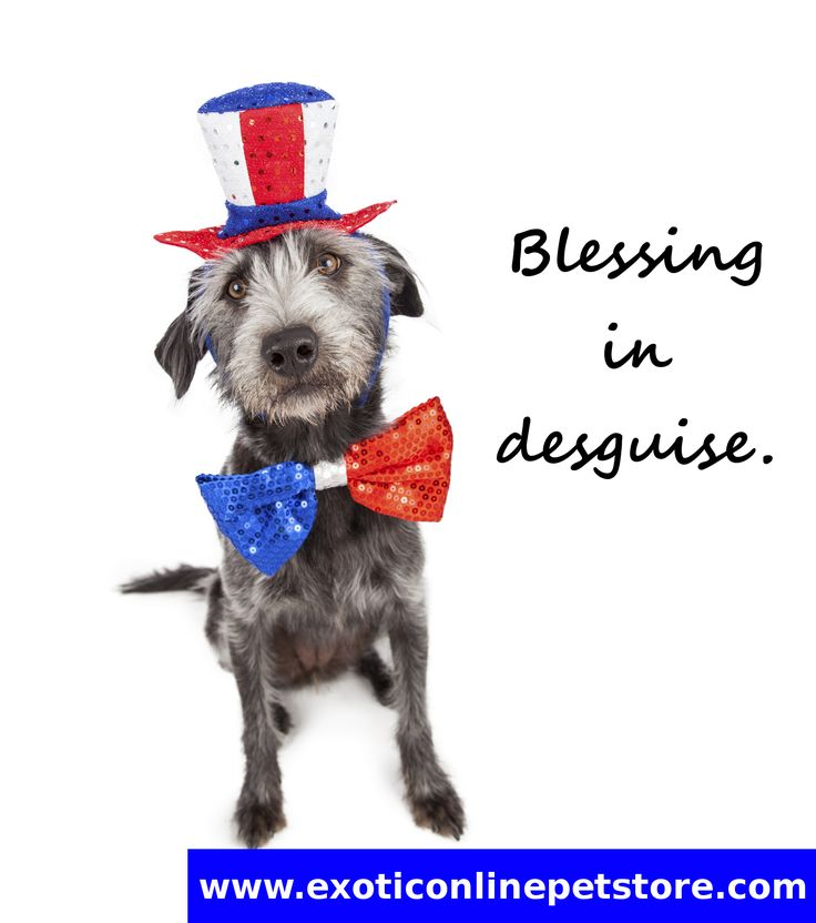 """Blessing in disguise."" #blessing  #disguis #dogs http://www.exoticonlinepetstore.com/"