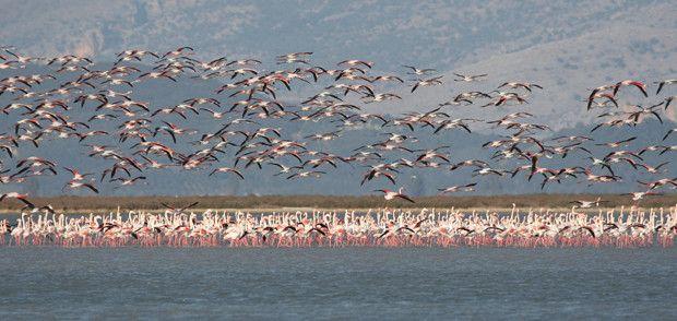 Λούρος: Το βασίλειο των πουλιών (φωτο) | Agrinio VOICE