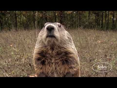The Groundhog Song from First Snow in the Woods--cute hibernation song