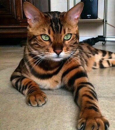 (notitle) – niedlichen Katzen
