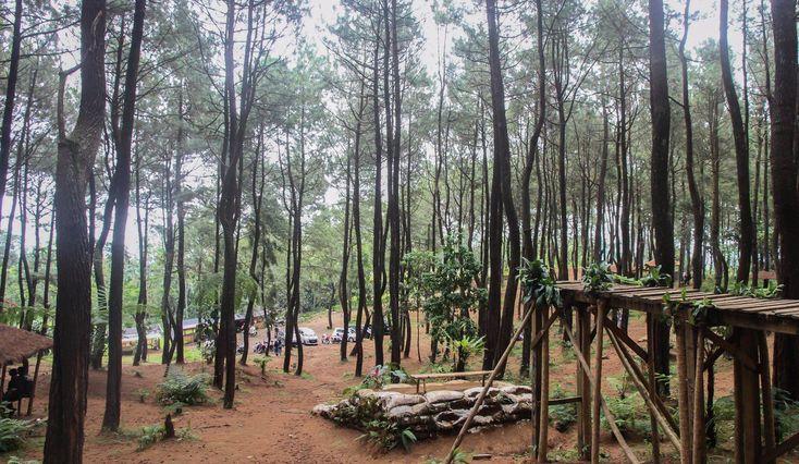 Hutan Pinus Pasir Langlang Wisata Asri di Jawa Barat - Jawa Barat
