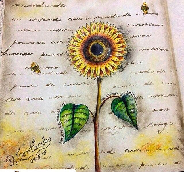 Secret Gardens Johanna Basford Garden Coloring Books Sunflowers Clever Colors Drawings