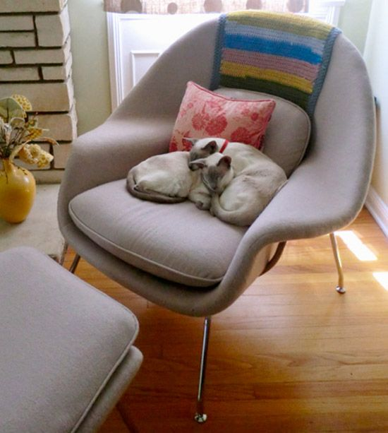 Cats love the womb chair too 39 best Cats and Iconic Chairs images on Pinterest   Cat love  . Eames Wicker Womb Chair. Home Design Ideas
