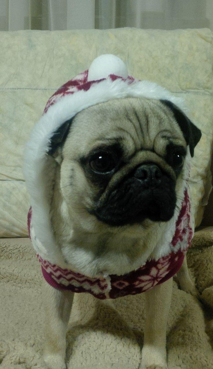 My Christmas Pug