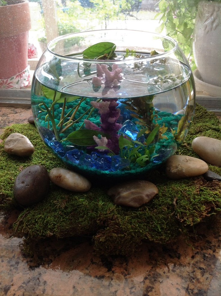 17 best images about aquarium fish and ideas on pinterest for Fish tank garden