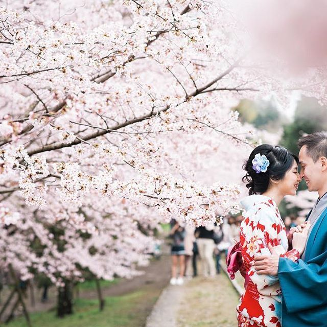 【storymywedding】さんのInstagramをピンしています。 《桜が満開に咲く情緒溢れる京都での前撮り📸 . 可憐でとってもロマンチックな写真です💓 . この前撮りレポを記事で特集しました☆上のプロフィールのリンク🔗から【Real Wedding Stories】のページでご紹介しています😊 . Photography: @kaiphotographyjapan  Hair&makeup: @ricche.ricche  Kimono: @yumeyakata_kyoto . . #ウェディングフォト #ウエディング #卒花 #プレ花嫁 #日本中のプレ花嫁さんと繋がりたい #2017春婚 #桜 #さくら #前撮り #ウエディングレポ #結婚式 #結婚式レポ #結婚式準備 #フォトグラファー #wedding #prewedding #romantic #sakura #cherryblossom #kyoto #love #prettyinpink #japan #weddingphotography #weddinginspiration…