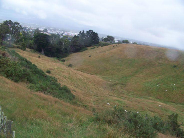 Landscape NZ