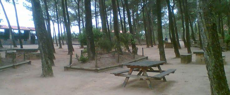 Sant Antoni área forestal enclavada en un amplio pinar al sur del Parque Natural Font Roja. Lugar ideal para iniciar una ruta por el Parque Natural o por la Vía Verde hasta la Sarga. #Alcoy #Alcoi #areasrecreativas #naturaleza