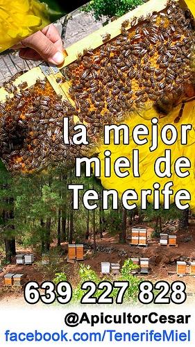 Tenerife Miel, la mejor miel de Tenerife. Apicultor Cesar 639 227 828