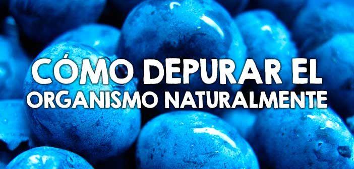 Cómo depurar el organismo naturalmente  http://nutricionysaludyg.com/salud/como-depurar-organismo-naturalmente/