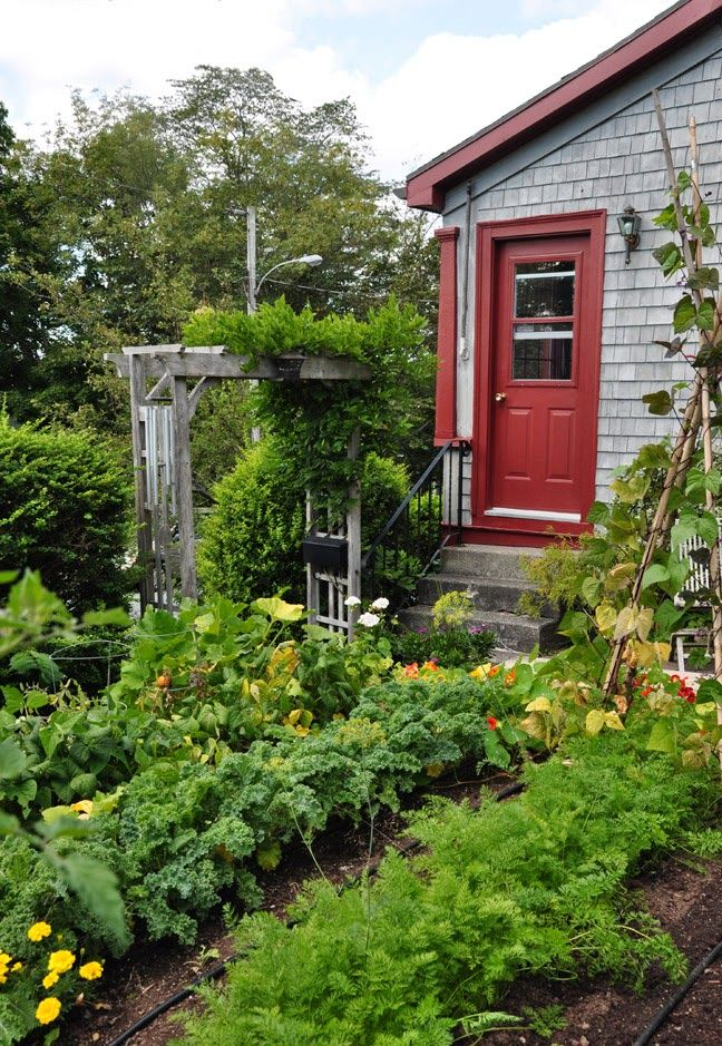 Three Dogs in a Garden: A few Ideas for Small Vegetable & Herb Gardens