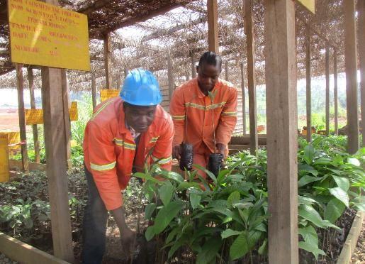Gestion responsable du patrimoine forestier : L'exemple de la société forestière Fipcam a travers le reboisement #Team237