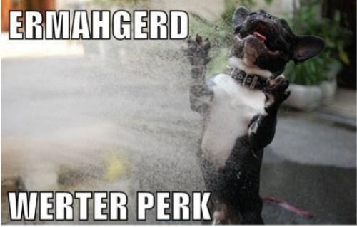 ermahgerd!Aw Animal, Ermahgerd Ashley Mason, Dogs Pics, Animal Pictures, Funny Dogs, Dodgers, Happy Dogs, Dogs Gallery, Beautiful Things