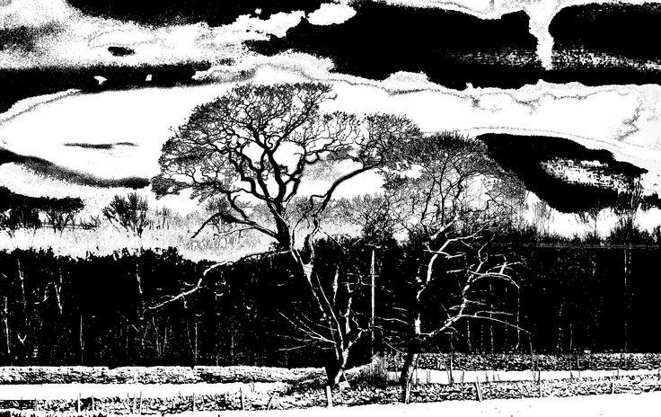 Tree near Bradshaw UK