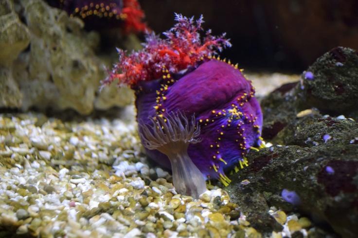 Taken at the local aquarium a vibrant full of color aquatic creature.