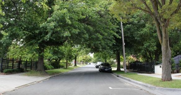 Deciduous Tree -lined streets of Balwyn. 20 Palmer Avenue Balwyn