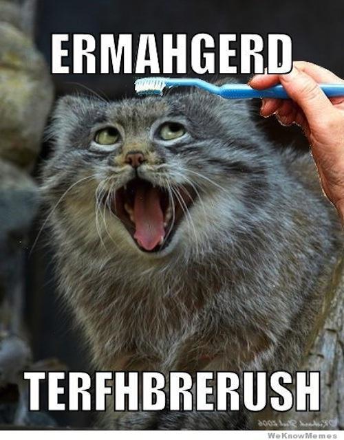 Google Image Result for http://cdn.smosh.com/sites/default/files/bloguploads/derpiest-ermahgerd-toothbrush-cat.jpg
