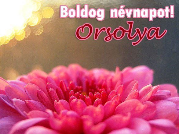 orsolya névnapi köszöntő 16 best virágok images on Pinterest | Ramos de novia, Arreglos  orsolya névnapi köszöntő