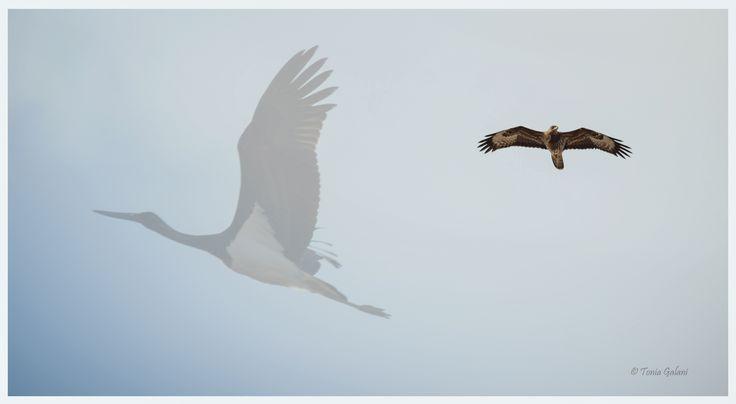 Flying is all about faith ! #birds #faith