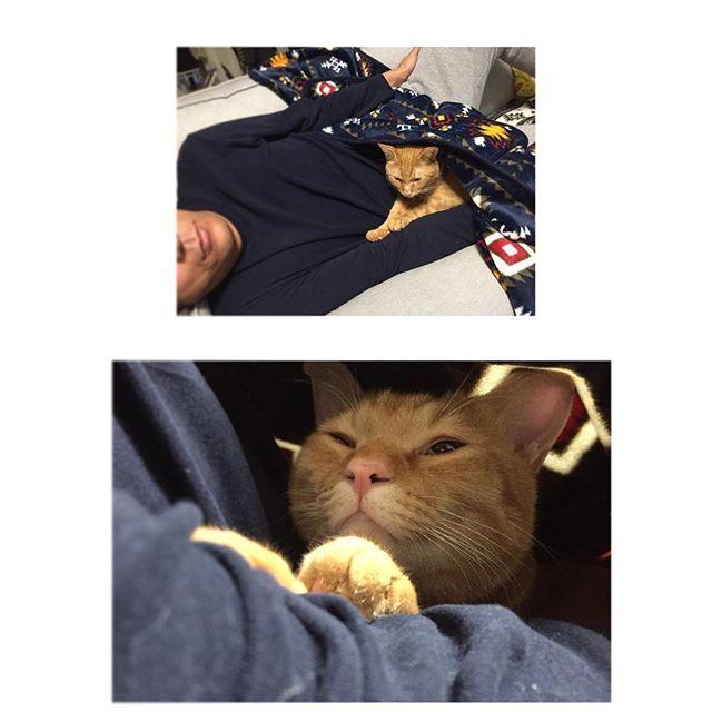 * 今日はおとーしゃんと うたた寝するちゃまさん🐈 * 寒くなってきたからか最近は 毛布に潜り込んできます🐈 * #猫#愛猫#ちゃま #今日のちゃま #猫のいる生活#茶トラ#茶トラ部 #添い寝#うたた寝#猫とイチャイチャ #にゃんすたぐらむ#にゃんすたぐらまー #cat#cats#lovelycat#lovelycats