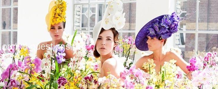 """""""Домашняя орхидея"""" - Конкурс красоты Ваших орхидей"""