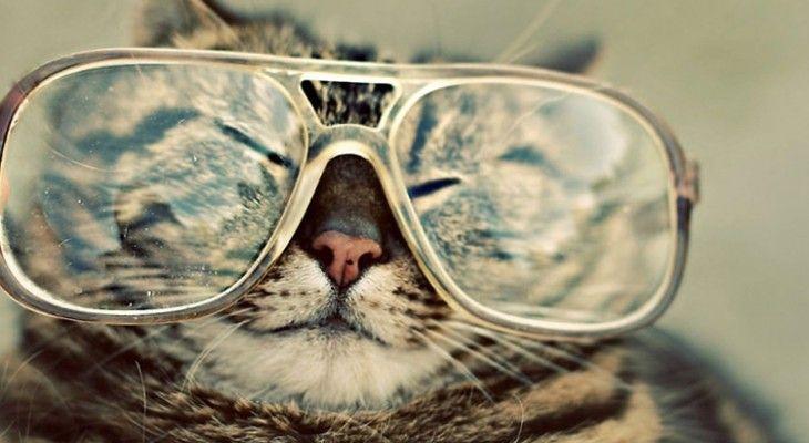 Kumpulan Foto Kucing Yang Menggemaskan