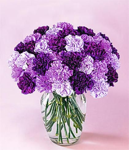 CARNATIONS, SHADES OF PURPLE ~~~ making carnations interesting