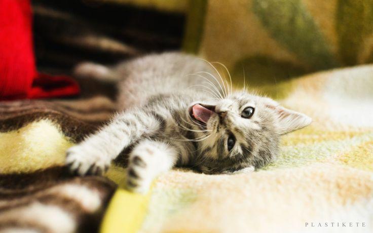 FUNNY KITTIE CAT by Plastikete  on 500px