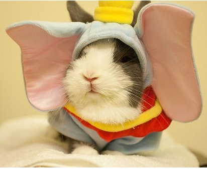 I need to get my other guinea pig this considering her name is dumbo