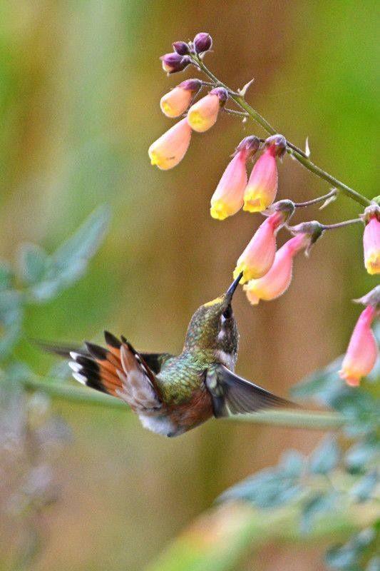 Sweet hummingbird!
