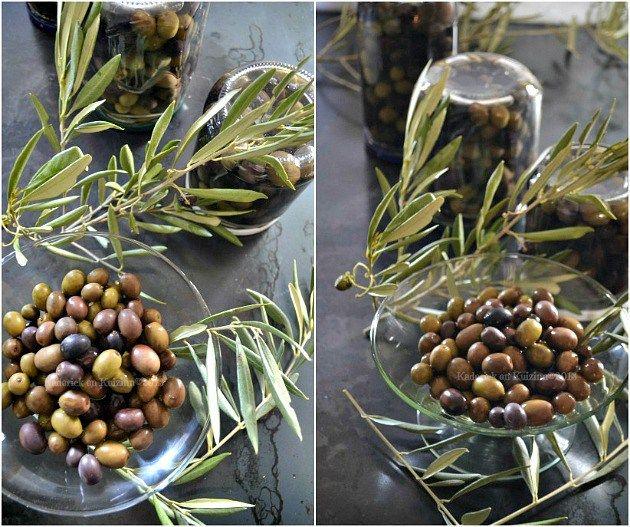 Préparation des olives vertes et noires de notre jardin en saumure fait maison