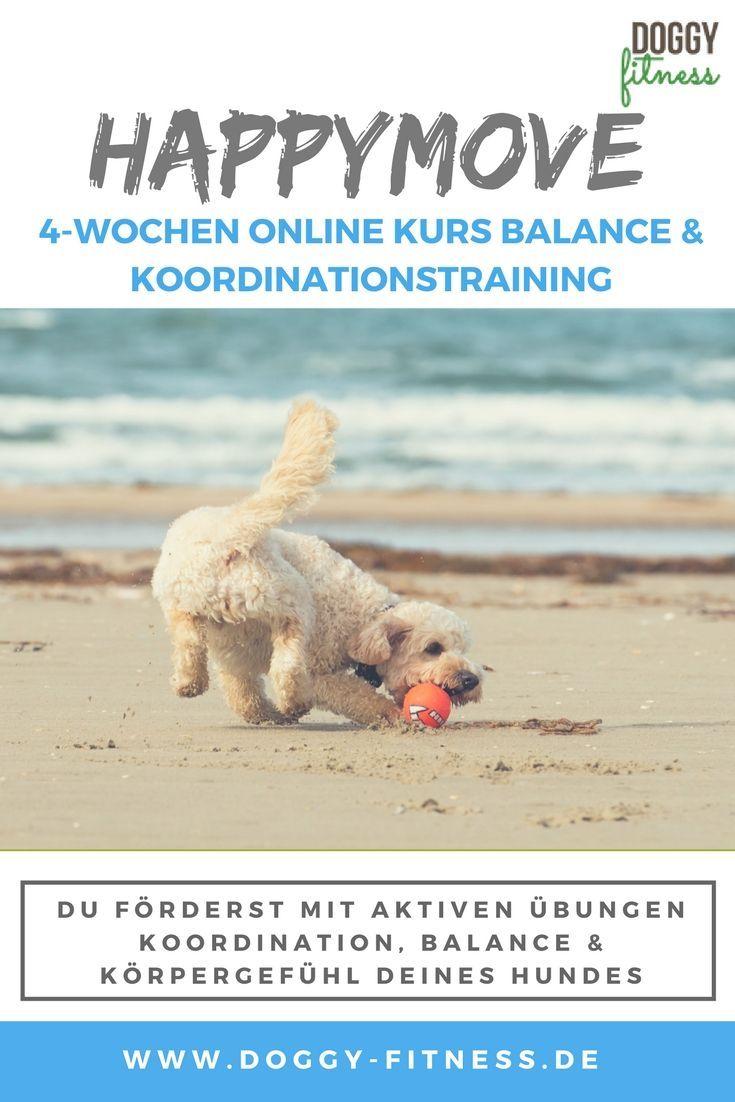 Happymove Balance Und Koordinationstraining Fur Deinen Hund Hunde Hundchen Training Hundesport