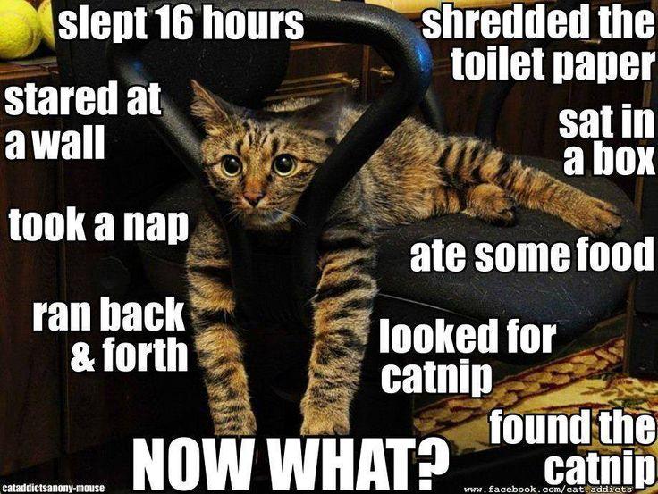#funny cats funny cat lol humor hilarious meme laughs