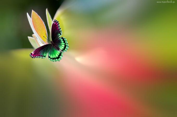 Motyl, Kwiat, Rozmycie