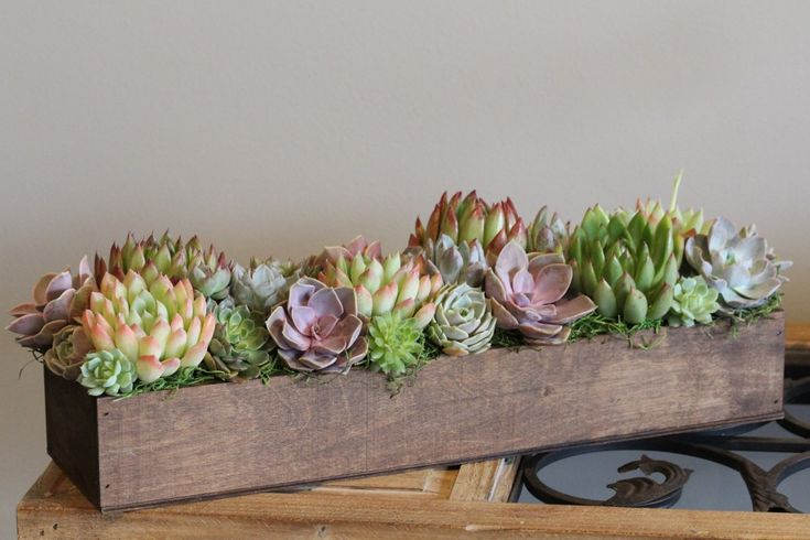 Succulents in a long and low wooden box .