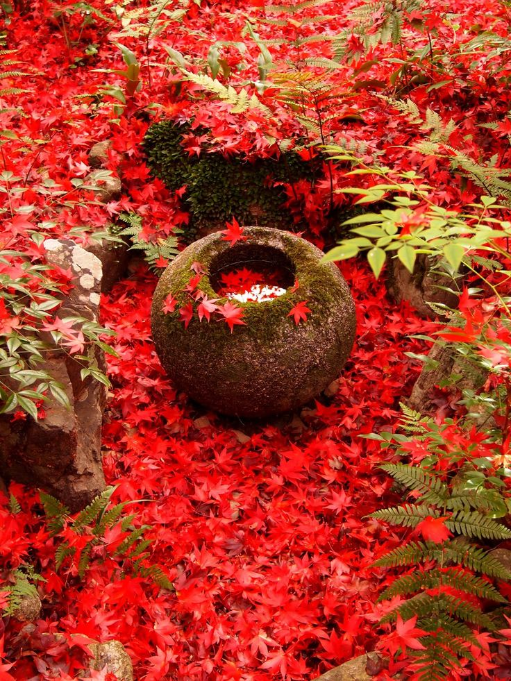 Momiji is the symbol of Kyoto
